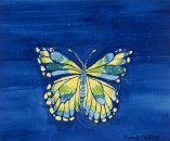 Dark blue background with butterfly on it. Butterfly in yellows, a little green and also light blue